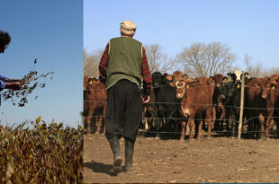 Argentine grain farmers and livestock ranchers protests against export caps