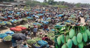 Fazli mango business has gained momentum in Rajshahi