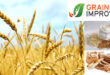 Grain Improvers – Enzymatic composition for higher grain grinding efficiency and sustainability – FAQ
