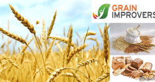 Grain Improvers – Enzymatic composition for higher grain grinding efficiency and sustainability - FAQ