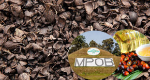 Malaysian Palm Oil Board invents technology to treat palm oil mill effluent