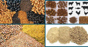 Fundamental & Technological development in feed milling by FCM and Chicks & Feeds