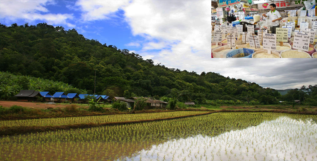 Thai rice exporters are becoming concerned about the potential of Thai hom mali rice
