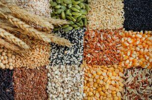 The grain market 2021: SEPTEMBER 7, 2021