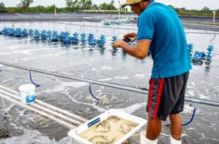 At present aquaculture is the fastest growing food sector in the world