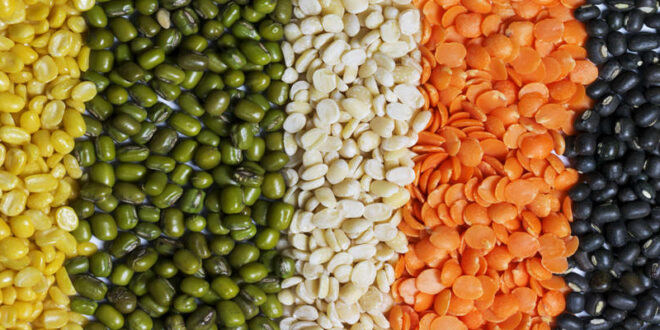 Imports are gradually increasing in Bangladesh due to low production of lentils
